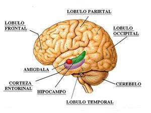 Acumulación de emociones en la amígdala